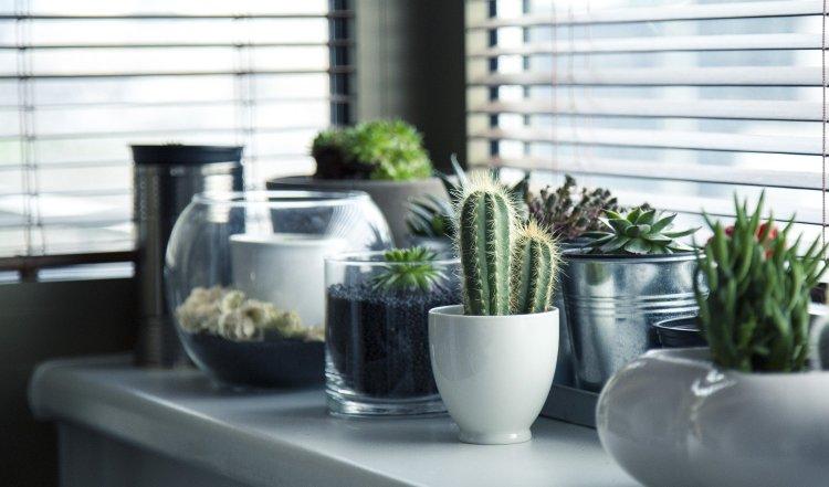 pots-716579_1920 (1)