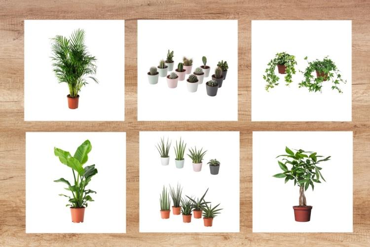 Idées cadeaux plantes ikea