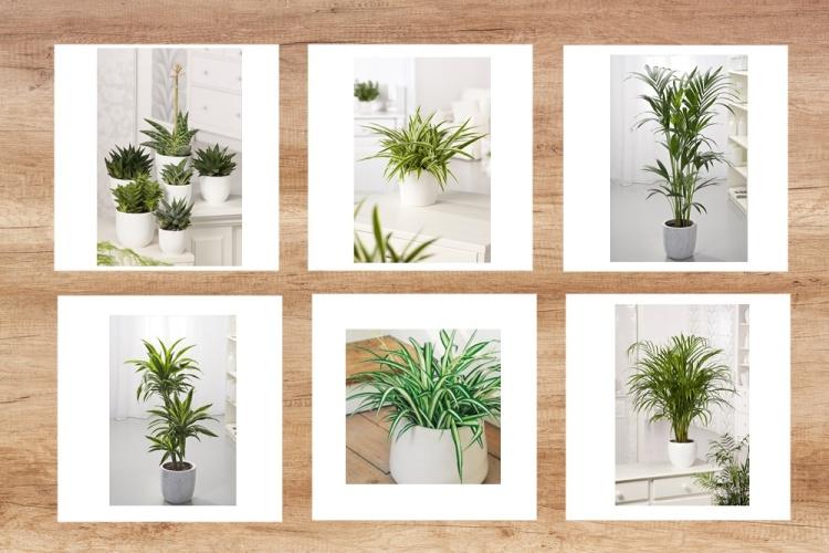 Idées cadeaux plantes jardiland