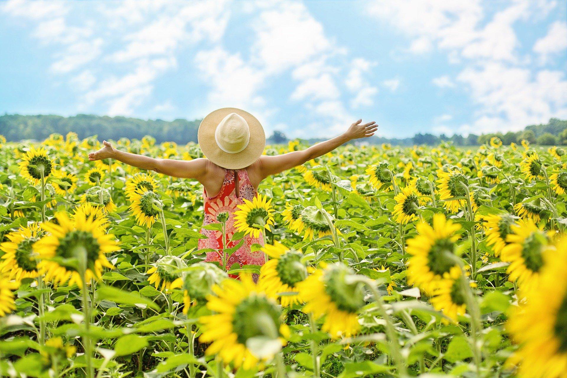 sunflowers-3640938_1920 (1)